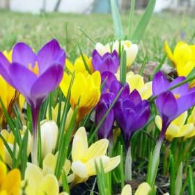 W oczekiwaniu na wiosnę :)))