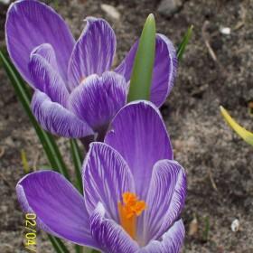 W koncu widać wiosnę