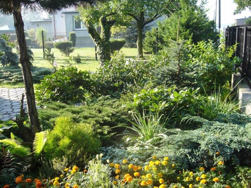 Rośliny, Mój ogród.