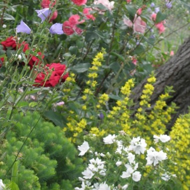 Działka warzywno-owocowo-kwiatowa...