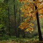Leśne klimaty, PERFECT DAY...