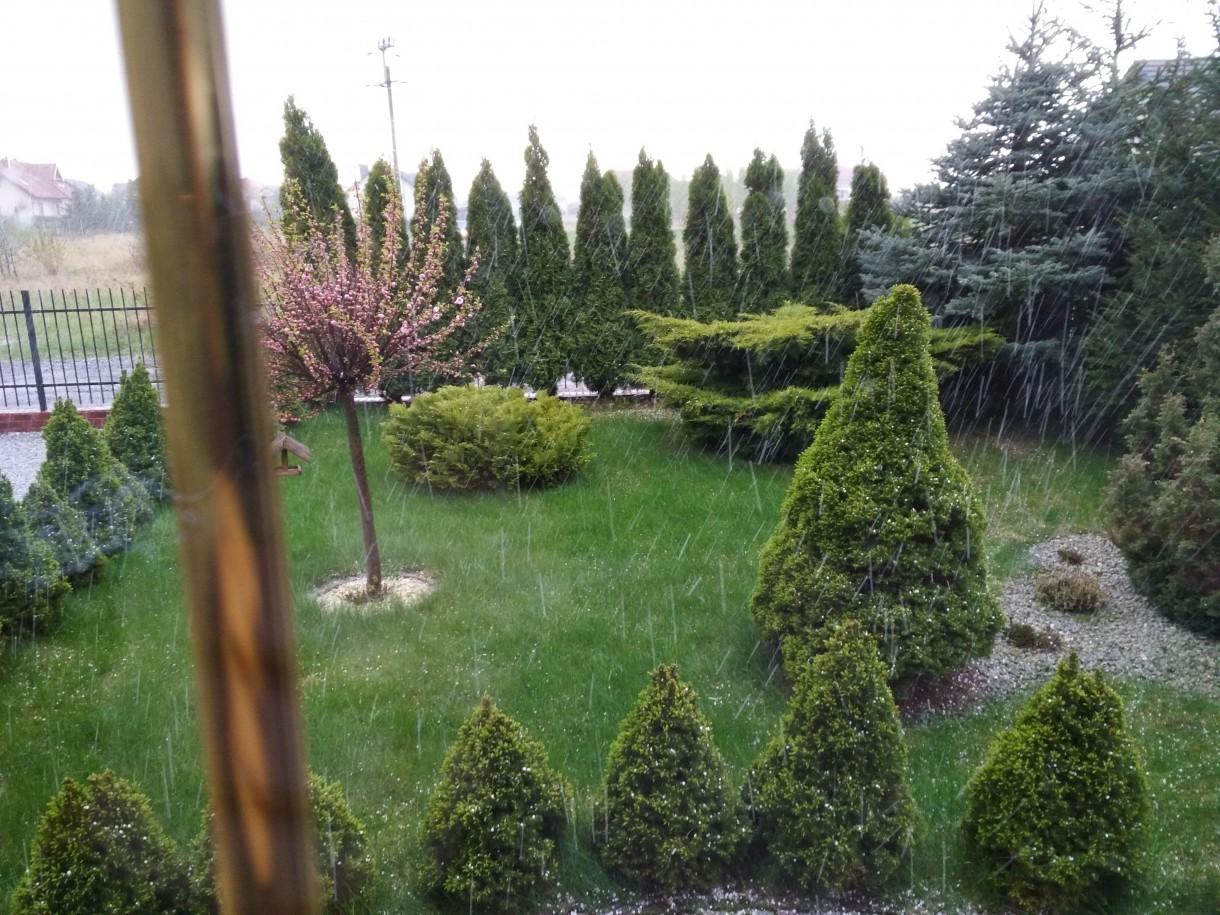 Ogród, Wiosenne ujęcia z ogrodu - zimno coraz zimniej....