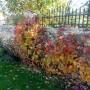 Ogród, Jesień w moim ogrodzie