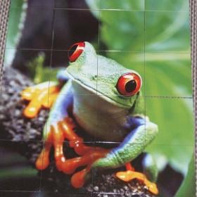 żabka na glazurze