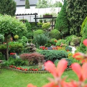 Ogródek teściowej (przyszłej:-))