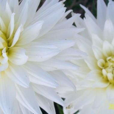 piękno kwiatów...