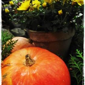 Cztery pory roku - październik &#x3B;