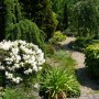 Rośliny, Mój ogród. - Kamyczkowa ścieżka...