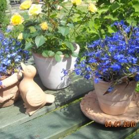 letni ogród - część II