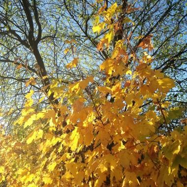 .................i złota jesień................