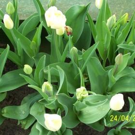 kwiecień, maj