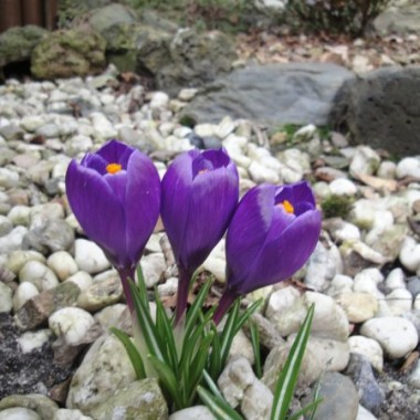...wiosna sie budzi...