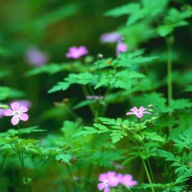 kwiaty i drzewa