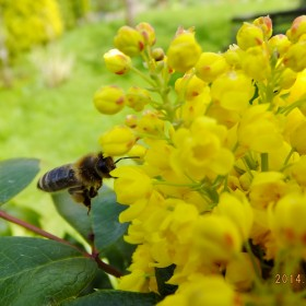 W wiosennym ogrodzie