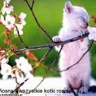 wiosna!...la, la , la, la :)