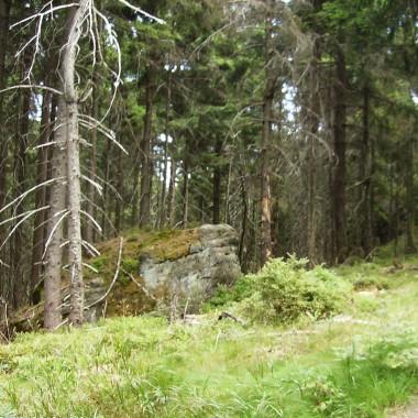 Cud natury - to przyroda i Stołowe Góry
