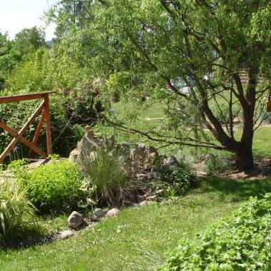 Trochę wiosny z mojego ogrodu....