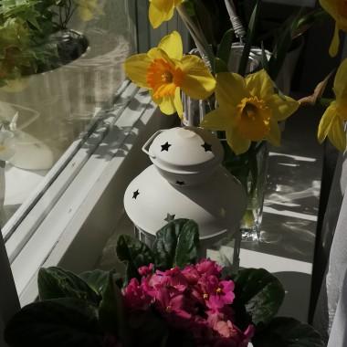Wiosna na parapecie