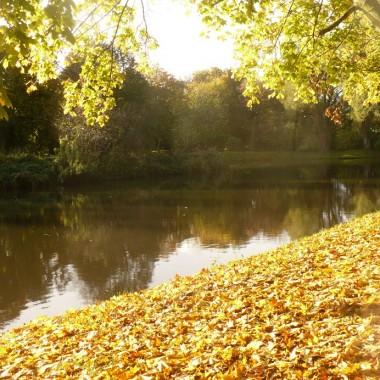 .............i jesienny staw..............