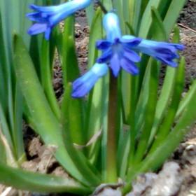 Pierwsze oznaki wiosny.