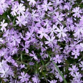Kwiaciochy z działki dla Was dziewczynki:-)