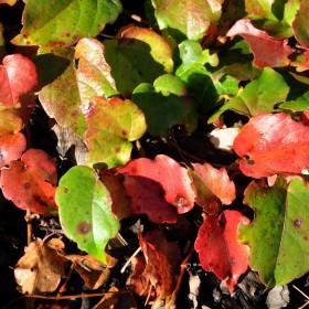W odcieniach czerwieni, żółci i zieleni.
