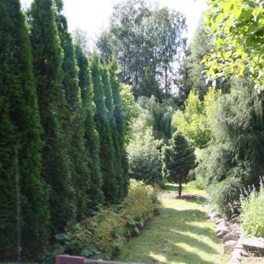 Ogród mojego Taty.