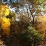 Ogród, Złoto w ogrodzie