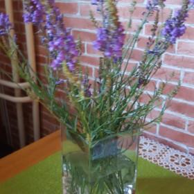 Kwiaty podobne do lawendy.