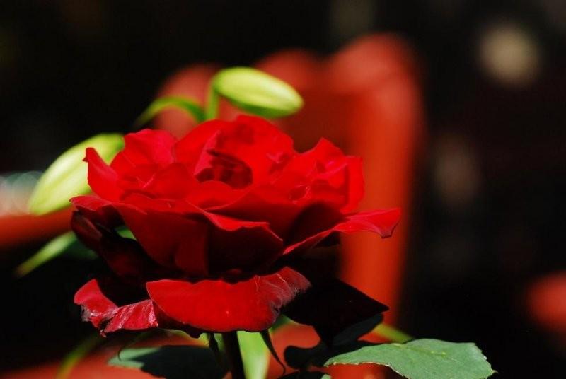 Rośliny, kwiatki :)