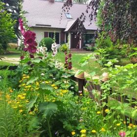 Ogród z krainy Gotów...