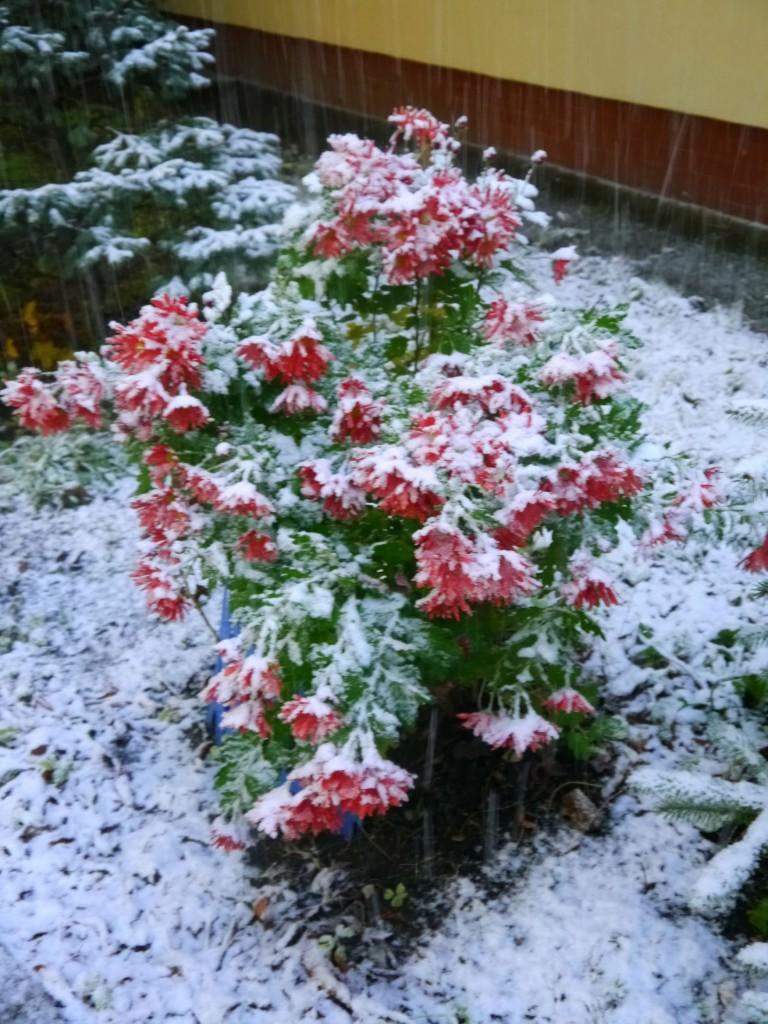 Balkon, Listopadowe zmiany - rośliny też sobie radzą