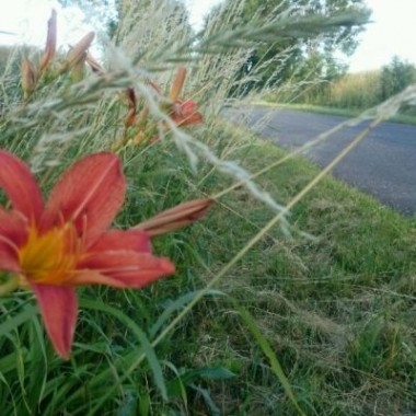 ...podczas przebieżki ten kwiatuszek się ukazał w przydrożnym rowie :)))