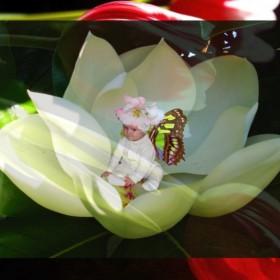 WIOSNA - motyle, latające kwiaty :)