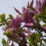 Pozostałe, Majowe love................. - ...........i kwiaty magnolii.................