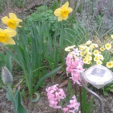 Wyższość wiosny nad zimą