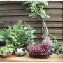 Wrzosy w domu i ogrodzie