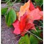 Rośliny, Deszczowo,nastrojowo - ..po deszczu..