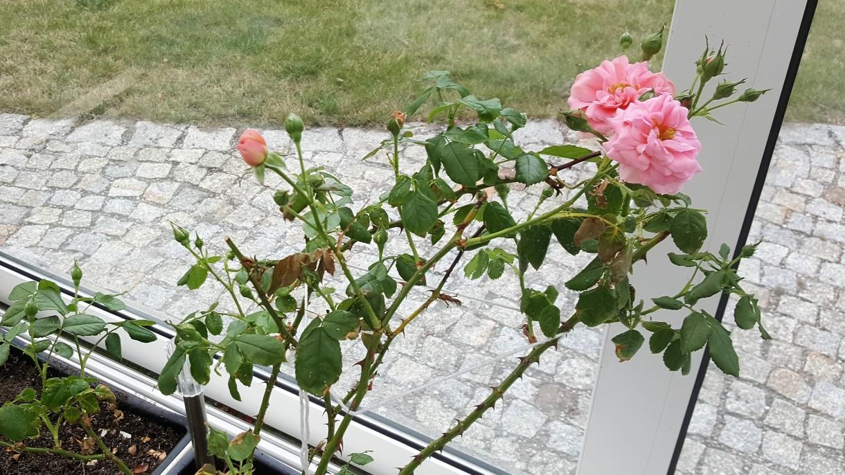Pozostałe, Moje gniazdko...kwiaty