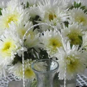 Kwiaty dla domu .......................