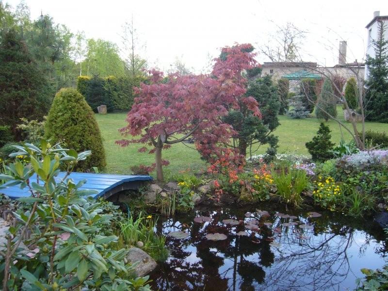 Rośliny, Mój ogród. - Niebieski mosteczek