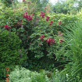 Mój ogród - kilka lat później