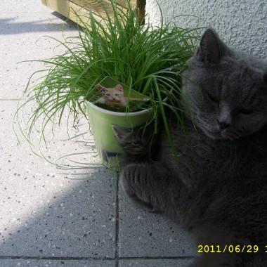 i kot Maniek znalazł sobie tu miejsce, mimo że ciągle niepokoją go sikorki...., jedna z nich wpadła do domu przez uchylone okno i niestety zgineła śmiercią tragiczną, mimo spokoju mojego kota, odezwał się w nim instynkt łowcy.....