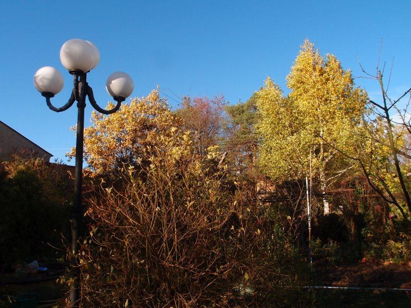 Ogród, Złoto w ogrodzie - brzoza i dąb trzymają  liście na pózniej