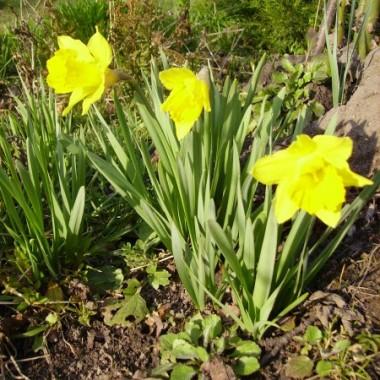 Moja wiosna:)