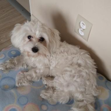 Tosia- nowy członek rodziny