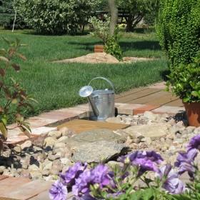 Obrazki z ogrodu 2.
