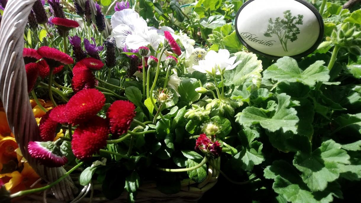 Dekoratorzy, Majowe robótki.................. - .....................i kwiatki................