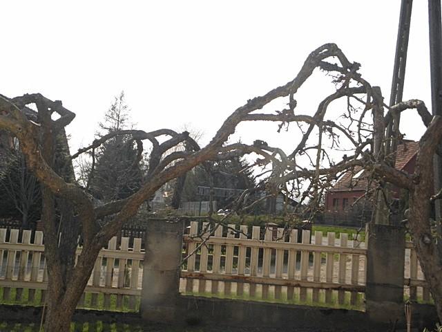 Pozostałe, Letni pokój czyli salon pod chmurką - Wspomniane drzewa
