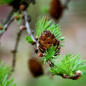 Wiosenne pstryczki w ogrodzie u Ciotki :-)
